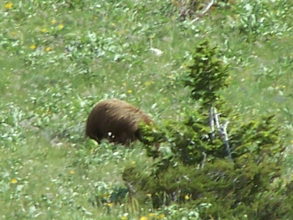 Benbow Road ATV Ride Grizzly Bear Sighting